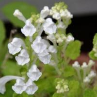 今我が家の庭で見れる花