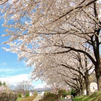青空sakura。
