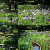 梅雨時の花たち(相模原北公園)その3