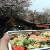 醍醐寺の桜ちらし