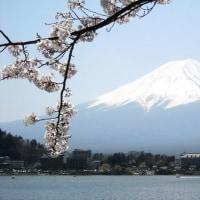 囲碁 富士山 桜