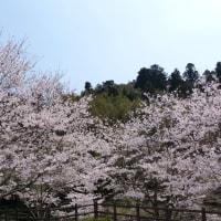 「八重の桜」に見る会津人とアテルイの東国人の類似性