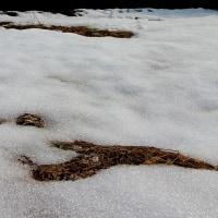 雪を見に行きました。