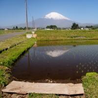 富士山が見える棚田・茶畑を巡る(静岡県・小山町の「用沢の棚田」)