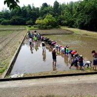 子ども田植え大会にスタッフで参加。