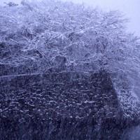 彦根、大雪です!くれぐれもご注意下さいませ♪