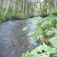 常呂川水系、仁頃川支流3本でオショロコマ発見できず