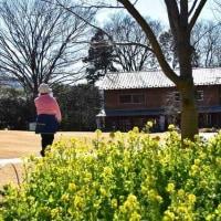 春めく公園
