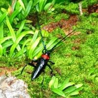 蛾とカミキリ虫の一穴