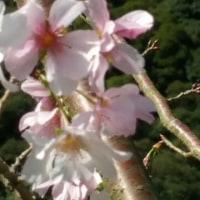 今日の花🌸