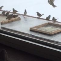 鳥さん来ないにゃ