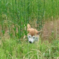 昼散歩は長野緑地