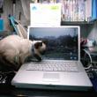 ネコが怒ったとき