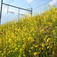 春が来たぞ~・・・・!!