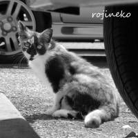 格差社会と猫