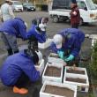 10月28日化女沼貴重植物の株分け作業(午前)&化女沼清掃活動(午後)実施