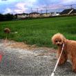 7/14(金)虹が見えたお散歩