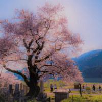 清水の桜 Ⅹ