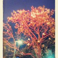 白木蓮が咲く春の夜