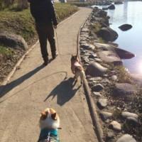 朝、兵庫島まで行く