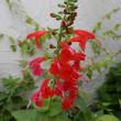 庭で咲く彩り豊かな夏の花