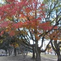 冬の紅葉狩り