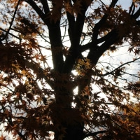 写真訳詩:時の樹影×William Wordsworth