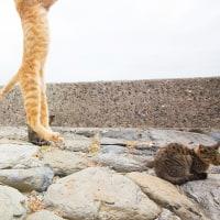 ネコの動きはいつも人間の予想を超えるのだ! @相島のネコたち