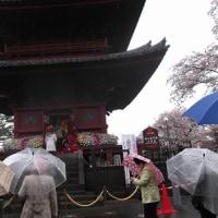雨の中の「池上本門寺春まつり」