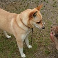 保護犬チャーチャ 母になる(動画付き)