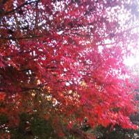 神奈川の山の奥には紅葉が迫っています