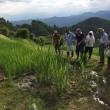 自然菜園スクール『自然稲作・発酵コース』田んぼの見学会&水管理