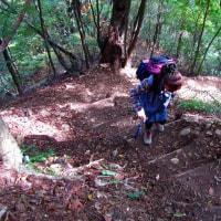 都民の森(三頭山)の巻き道~槇寄山ー①