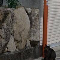 猫とスイセン