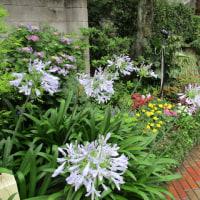 もう一つの Holy Garden 2017夏秋仕様1ヶ月後