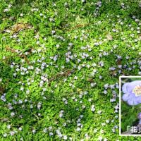 近所で出会う花たち 四月尽