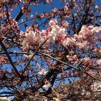 春の足音      その2