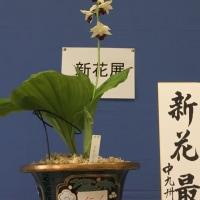 中九州えびね愛好会花展