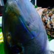 たまにはお刺身魚🐟