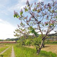 桐の花と鉄道