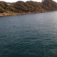 磯釣遊会 11月度例会  アオリイカ㏌串本