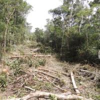 工事用道路造成で許可の範囲を超えた違法伐採---わずか1ケ月ほどの工期短縮のために森の破壊を許さない!