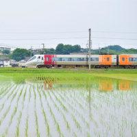 アンパンマン列車と田んぼのコラボ(今治市)