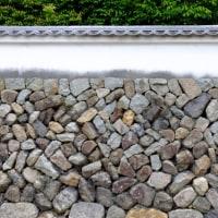 東福寺の青紅葉にうっとり