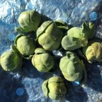芽キャベツのスープ