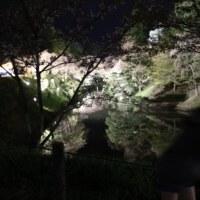 野尻湖 サイクリング 山菜みっけ^^