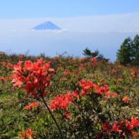 富士山 本場蓮華つつじ追い... パート2 青空の下で