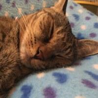 ココの寝顔