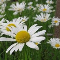 道中で見た花々@田沢湖から十和田湖まで