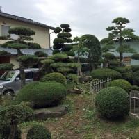 クロマツを正真木として玉ものでまとまった庭園